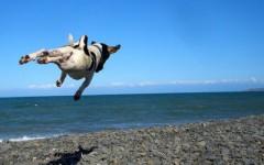 pic3flyingdog
