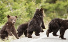 pic4bearcubs